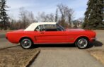 1966 Ford Mustang Convertible – NO RESERVE